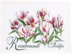 TG447A Rembrandt Tulips