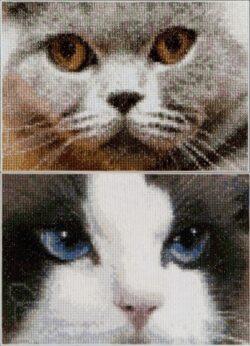 TG542A Cats Smokey + Blu
